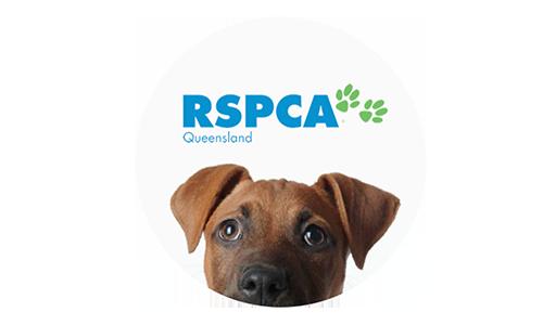 Rspca Queensland Client Case Study Deputy C